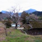 「この家の屋根がいいんだよ」  BY店長さん  春になると桜が咲いて、まさに「里の春」といった風情になります