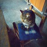 かの有名なネコ写真家「岩合さん」の被写体にもなった、森山窯さんの看板ネコ♪
