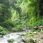 Enjoy a short trekking to reach the hidden Sekumpul Waterfalls