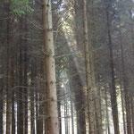 Bos grenzend aan Coingt