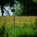 Voorjaar in de weide
