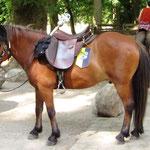 Stafetten-Pony Prins, ausgerüstet mit Stafettenstab und Sachsen-Anhalt-Wimpel
