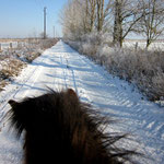 Im richtigen Winter ging es ja noch, Eis und Schnee glichen die Löcher aus.