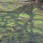 木の下の2羽の鳥
