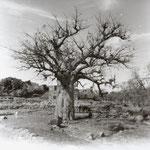 Baobab photo HOLGA 2011