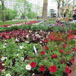 11. Mai: Im Rahmen der 40-Jahr-Feierlichkeiten wird auf der Marzahner Promenade eine alte Tradition wiederbelebt: der Blumenmarkt. Veranstalter der 750 Meter langen Blütenpromenade ist die städtische Wohnungsbaugesellschaft Degewo.