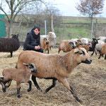 """Januar: Auf dem Kinderbauernhof """"SpieleWald"""" der Spielplatzinitiative Marzahn in der Eichner Chaussee treibt ein Tierhasser sein Unwesen. Katzen und Hühner verschwinden, Enten werden geköpft ..."""