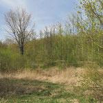 Januar: Die Senatsumweltverwaltung bewilligt die Mittel für die Entwicklung der Hönower Weiherkette (2,2 Mio. €). In dem Landschaftsschutzgebiet soll ab 2021 u.a. ein Beweidungskonzept mit Schottischen Hochlandrindern realisiert werden.