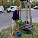 24. April: Die Natur leidet unter dem viel zu trockenen Frühjahr und zwei extremen Sommern hintereinander. In einem Aufruf bittet das Bezirksamt die Bevölkerung beim Gießen der Straßenbäume um Mithilfe.