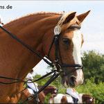 (c) by cll von http://www.photofans.de