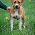 Daisy, cagnolina da obedience, vive con Giovanni e la sua famiglia