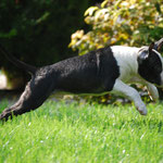 Jumping Brando