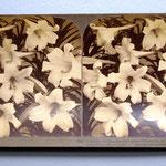 Tirage sur papier albuminé (vues stéréoscopiques). Underwood and Underwood publishers