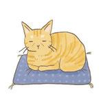 老猫のイラスト