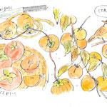 柿のイラストー水彩