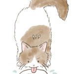 水をたくさん飲んでいる猫のイラスト