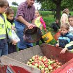 Apfelernte der Besseresser