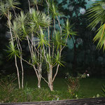 Orbs in our Lake Weyba Qld frontyard