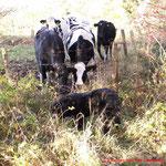 Louna interessieren die Kühe gar nicht