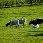 Ausblick aus dem Haus ... Beef! ;-)