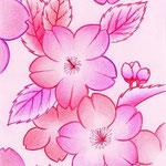 エゾヤマザクラ(色鉛筆・2009制作)