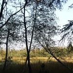 Wildsee in Kaltenbronn