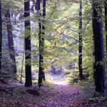 an der Neusatzer Pfütz gehts in den Wald zum Dobel