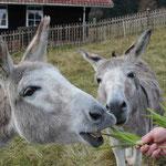 Oskar und Benni - laden zum Kinderspaziergang ein...
