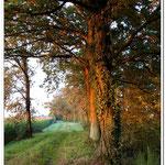 le réveil des chênes