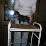 Даймонд Дью (фото с актировки)