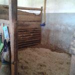 Innenbox in der Stallgasse
