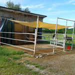 Contaier- Außenbox mit Paddock