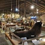 """El Tesoro: """"Museo del Mar"""""""