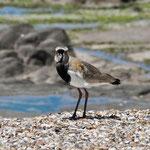 Uruguay - ein Paradies für Ornithologen
