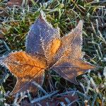 Januar: Ist das jetzt schon Winter?