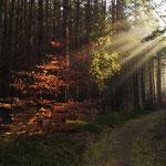 Dezember: Morning Run. Morning Sun.