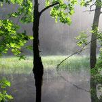 Juli: Sommermorgen in der Dresdner Heide