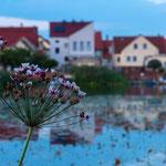 August: An der Havel (Blick auf Pritzerbe)