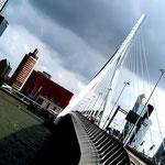 August: Die Erasmus-Brücke in Rotterdam