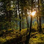 Erwachen am Forststeig