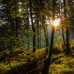 September: Erwachen am Forststeig