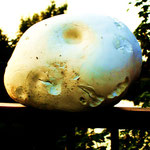 mystic mushroom, copyright Nathalie Arun