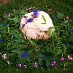 mystic mushroom, copyright Nathalie Arunmystic mushroom, copyright Nathalie Arun