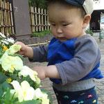 蓮正寺公園はお花がいっぱい!