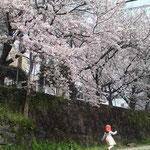 桜吹雪の中をかけぬけて~