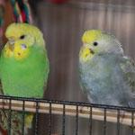 Lilo und Pearl II
