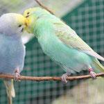 SevenUp und seine neue Freundin Violet