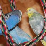 Blue und Pearl - im Hintergrund Jolly