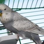 Edward - noch im Ankunftskäfig