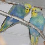 Jack und Angel verliebt